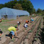 La Satul Seniorilor crește o grădină ca'n povești!